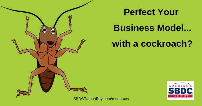 Perfect your business model with a cockroach startup